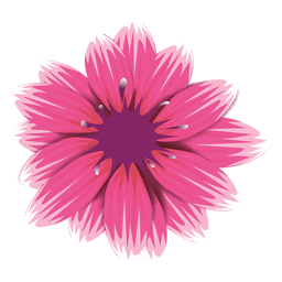 flor rosada del gerbera