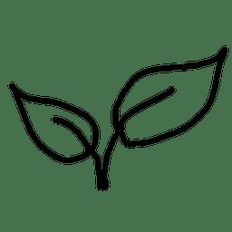 esboço folha da planta 1