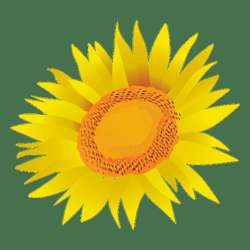 Sunflower cartoon Transparent PNG