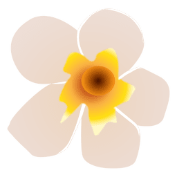 Spa de flores brancas