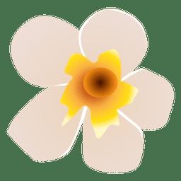 Spa flor blanca