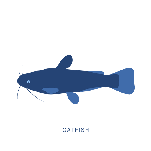 Catfish fish fishing animal Transparent PNG