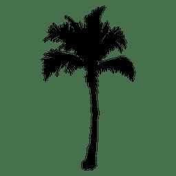 Palmeira Palmeira