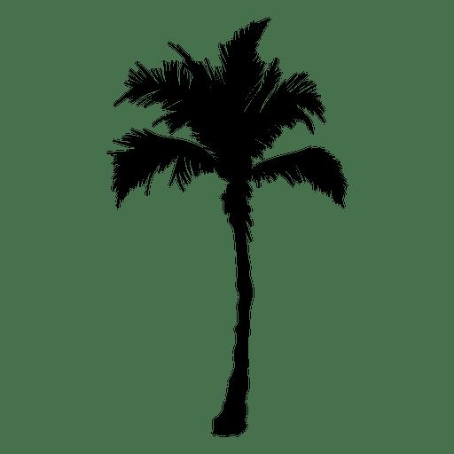 Palmeira Palmeira Transparent PNG