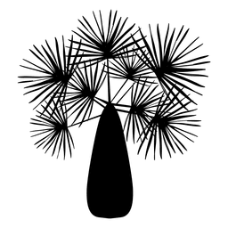 Silhueta de palmeira
