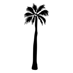 Tall silueta de la palmera silueta
