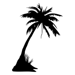 Palm palm tree summer silhouette