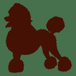 Cão da silhueta poodle