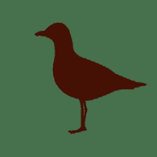 Silueta de ave marina Transparent PNG