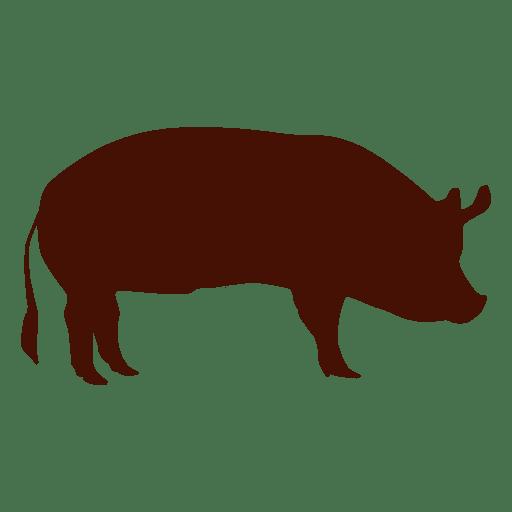 Porco de silhueta