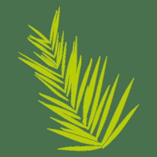 Date fern Transparent PNG