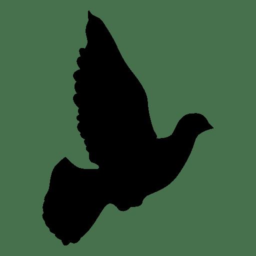 Secuencia de vuelo de paloma