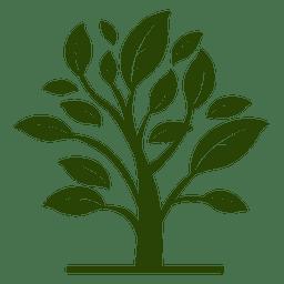 Planta floral