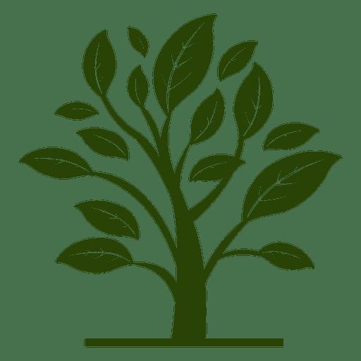 Planta floral Transparent PNG
