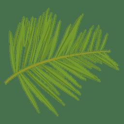 Samambaia verde