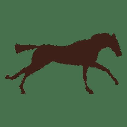 Bewegungsablauf im Pferd 6 Transparent PNG