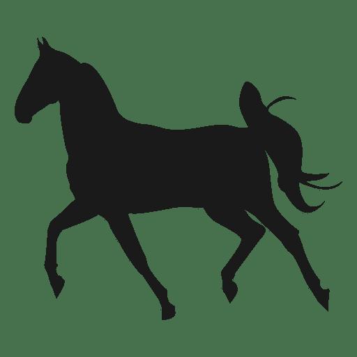 Horse running 5