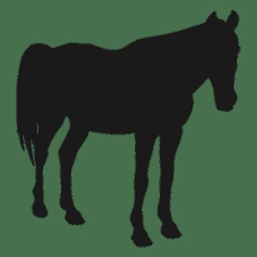 Silueta durmiendo caballo