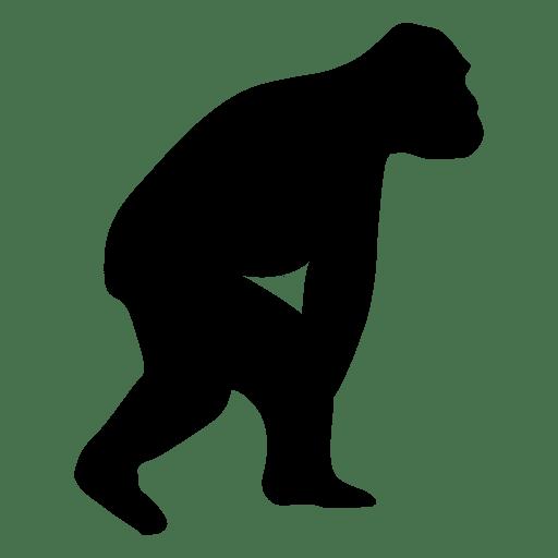 Evolución humana Transparent PNG
