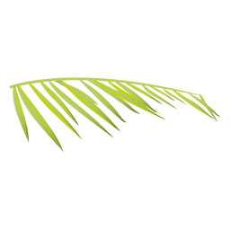 Helecho de palma