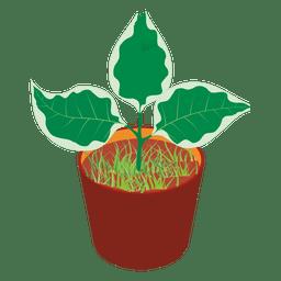 Tina de la planta