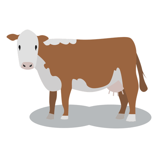 Cow meat animal