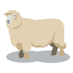 Sheep wool animal