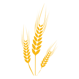 Planta alimento do trigo