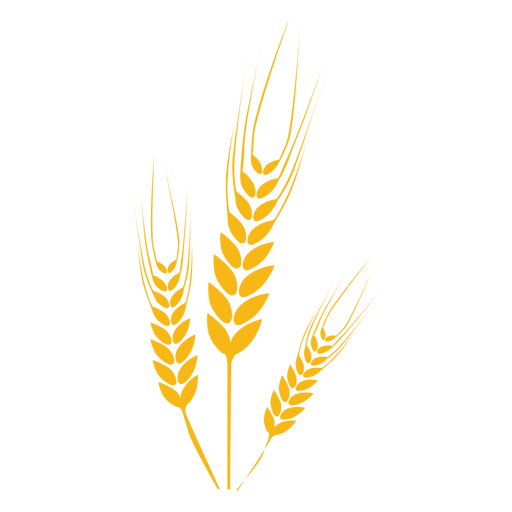 Wheat food  Plant Transparent PNG