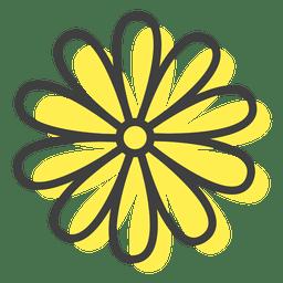Flower inflorescence margarite
