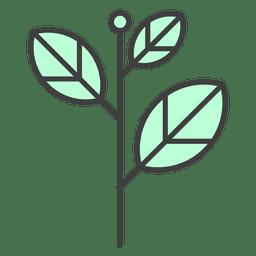 hojas de color verde tallo de la planta