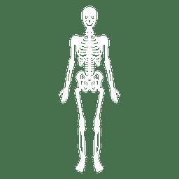 Hiuman body 5.svg