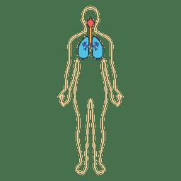 Corpo de oxigênio de respiração de pulmões humanos