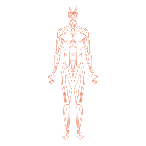 Muscles anatomy man - Transparent PNG & SVG vector