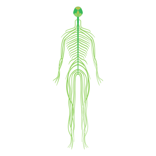 Nervous system brain human body Transparent PNG