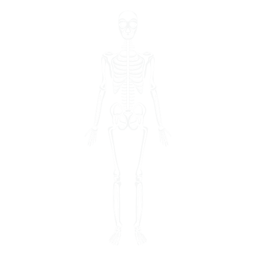 Ossos do corpo humano sistema esquelético Transparent PNG