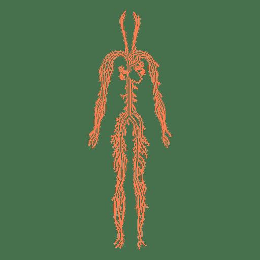 Salud del sistema circulatorio de la sangre. Transparent PNG