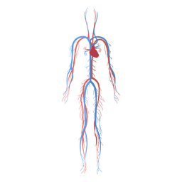 Sistema circulatório de saúde sistema cardiovascular corpo humano de sangue
