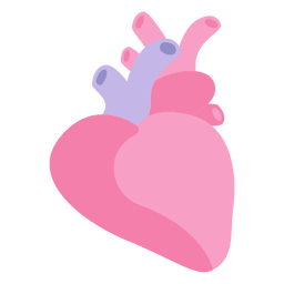 Heart human organ