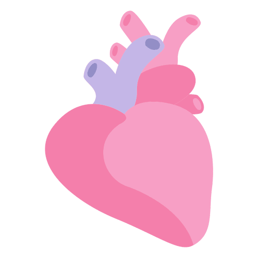 Heart human organ Transparent PNG