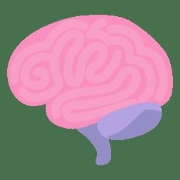 Órgão humano do cérebro