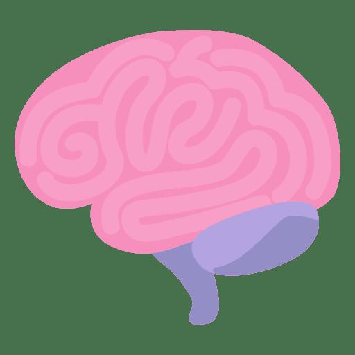 Órgão humano do cérebro Transparent PNG