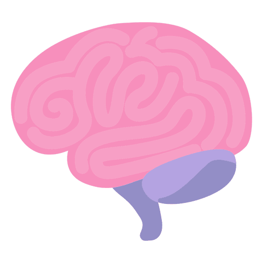 Brain human organ