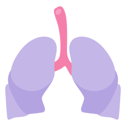 Órgão humano dos pulmões