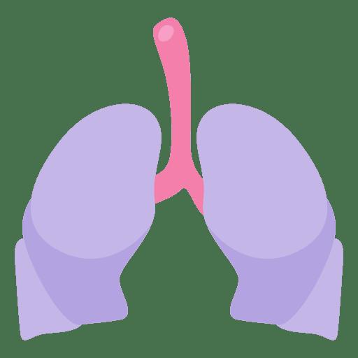 Lungs human organ Transparent PNG