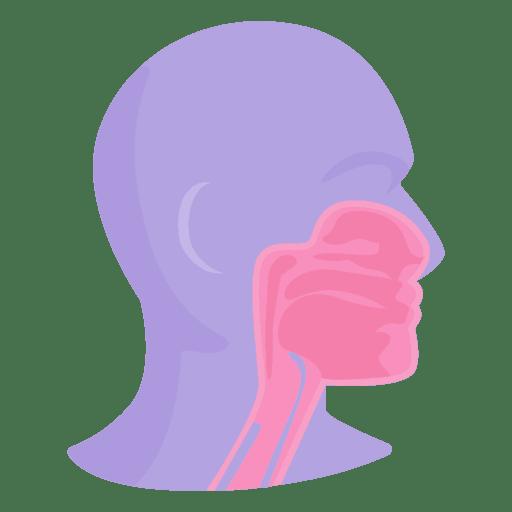 Anatomía de la boca - Descargar PNG/SVG transparente