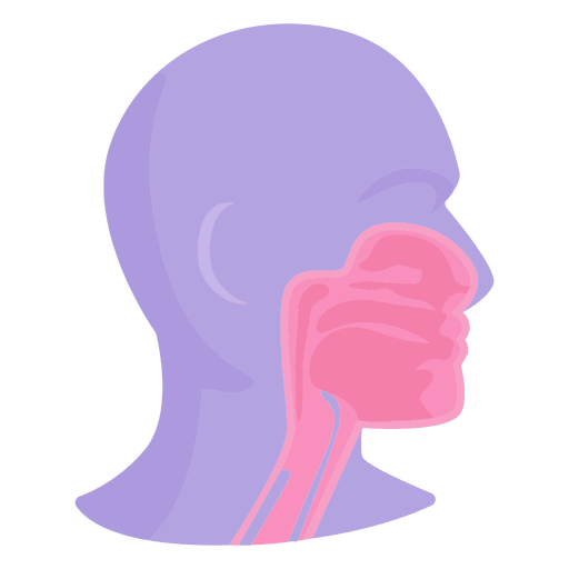 Mouth anatomy - Transparent PNG & SVG vector
