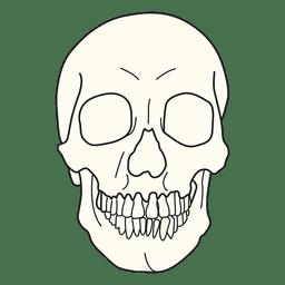 Ilustração médica de crânio