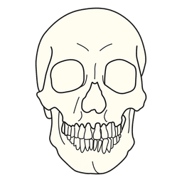Skull medical illustration