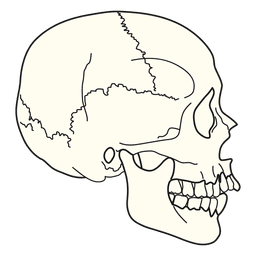 Vista lateral do crânio de ilustração médica